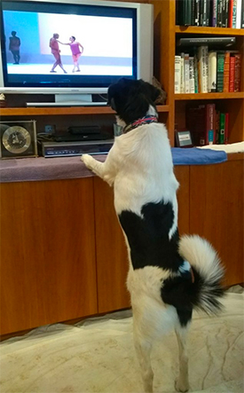 a dog watching ballet dancers on television